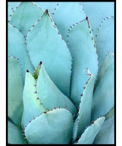 plakat agawa botaniczny rośliny
