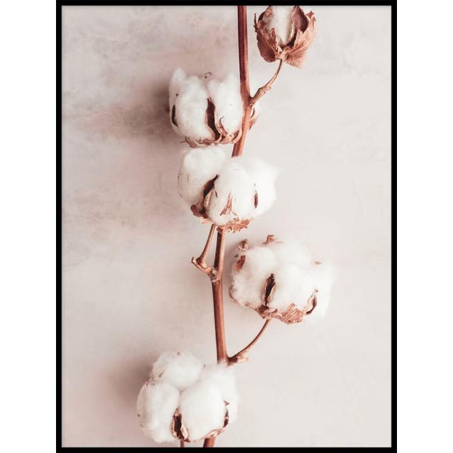 Krzew bawełny plakat 30x40