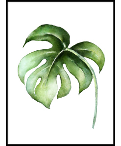 PLAKATY BOTANICZNE z liśćmi zielone liście