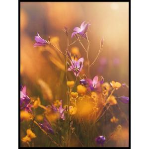 kwiatki plakaty z fiolkami slonce