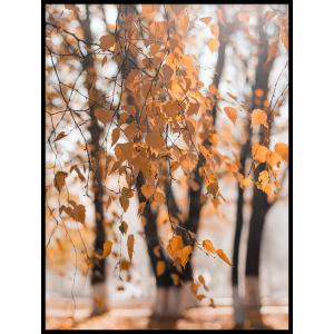 liście na drzewie plakat jesień las