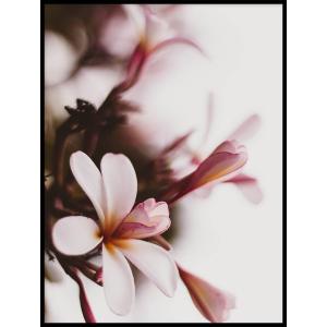 plakat kwiaty magnoli
