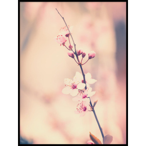 pąki kwiatów na drzewie plakat