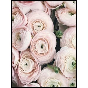 plakat z różami sklep foto pp