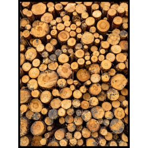 drzewa kłody plakat do salonu