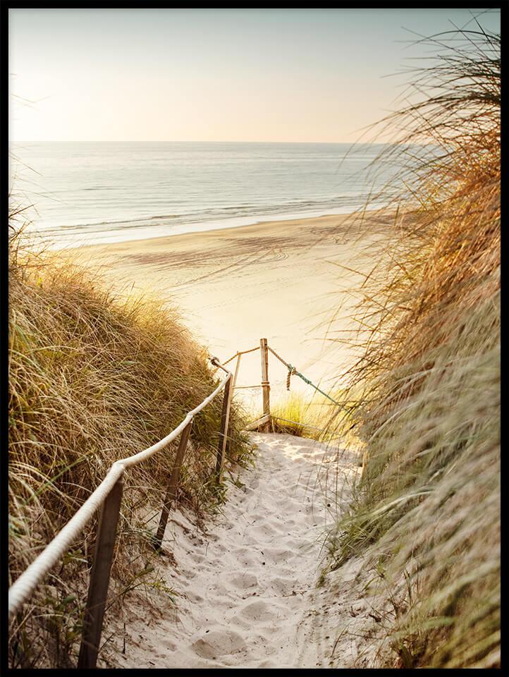 plaża wydma trawa