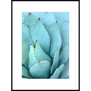 sklep z plakatami agawa roślina