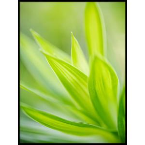 trawa zielony liść plakat