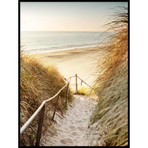 wydma piasek trawa plakat