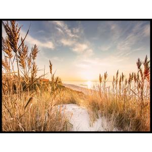 plaża piasek wydmy plakaty tryptyk