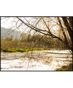 poster drzewo rzeka