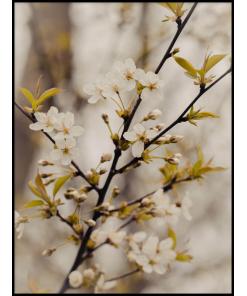 kwitnące drzewo plakaty do salonu