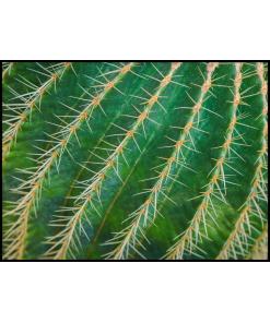 kolce kaktusa Stylowe obrazy i plakaty do salonu.