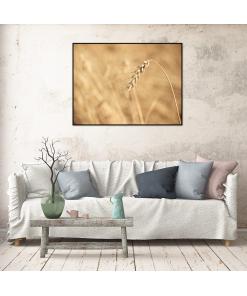 Plakat - Zboże - Plakat z serii Botanic z wizerunkiem zboża