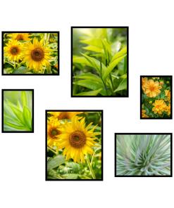 Plakaty ze słonecznikami i kwiatami - rośliny obrazy
