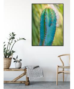 kaktus - Plakat, który ozdobi każde wnętrze. Drukowany na wysokiej jakości papierze