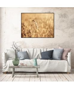 Plakat z serii Natura, z motywem zboża.